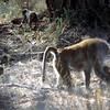 022 Samburu