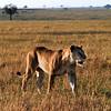 010 Masai Mara