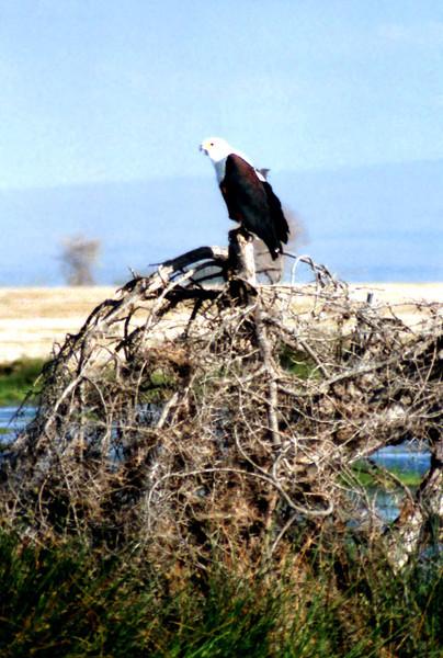 032 Amboseli