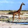 037 Amboseli