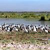 026 Amboseli