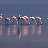 Morning with Flamingo
