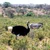 035 Samburu