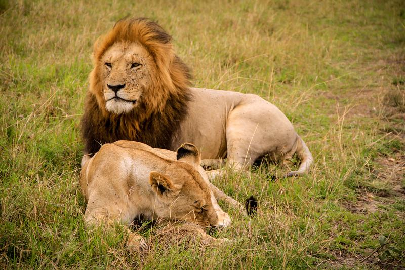 African safari in Kenya
