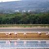 030  Lake Naivasha