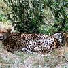 009 Amboseli