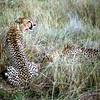 020 Masai Mara