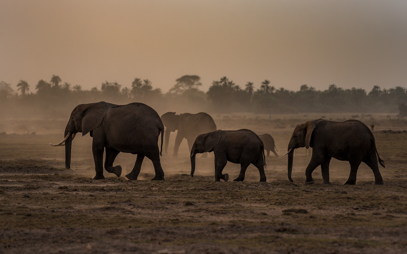 Harmony of African Elephants