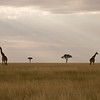 Typical Masai Mara plains in Kenya: grass, grass, animals, grass, Acacia Trees and grass - as far as you can see! By Debbie Thompson on August 11, 2008.