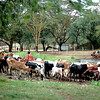 018 Masai Mara