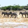 016 Samburu