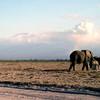 003 Amboseli