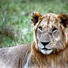 033 Masai Mara