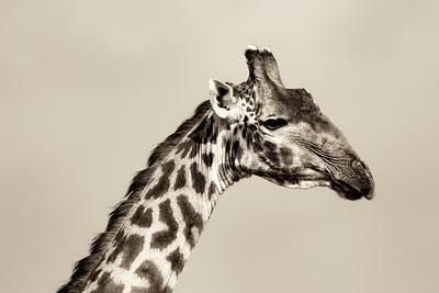Giraffe 7436