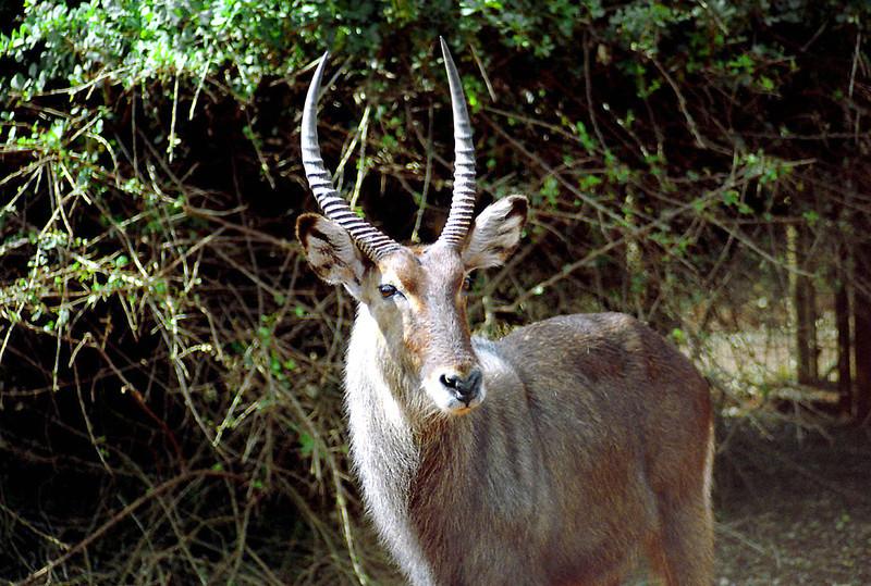 19 Nairobi Nat'l Park