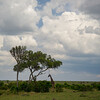 safari at Masai Mara, Kenya