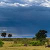 Kenya Safari  at Masai Mara