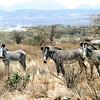 010 Samburu
