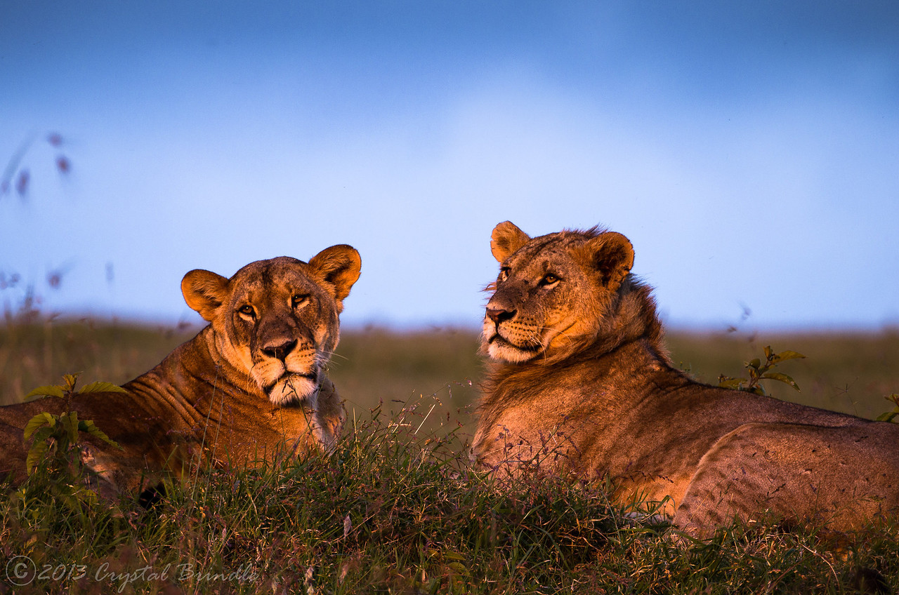 King and Queen at Sunset