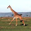 019 Masai Mara