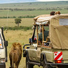 wild animals at the game park, Kenya