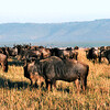 004 Masai Mara