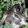 015 Samburu