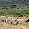 026 Masai Mara