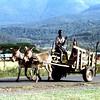 014 Masai Mara