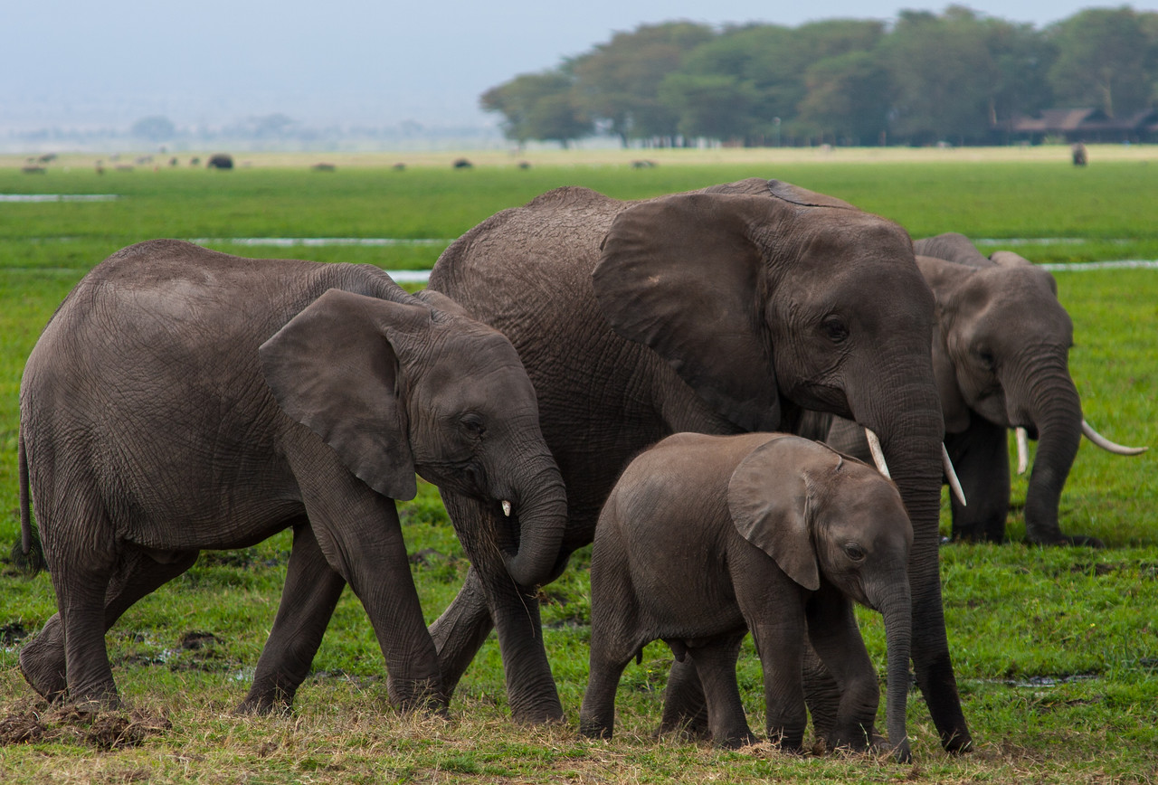 A family of elephants. In the background you can see many others.