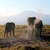 021 Amboseli