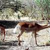036 Samburu