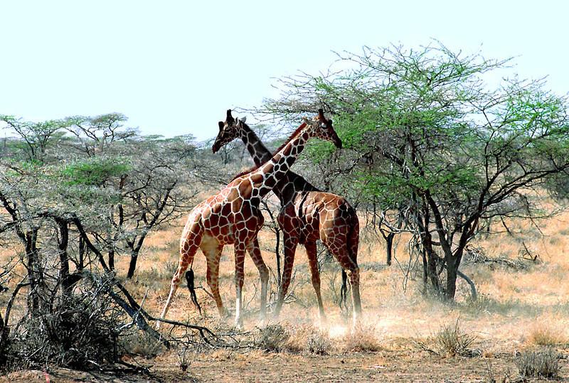 009 Samburu