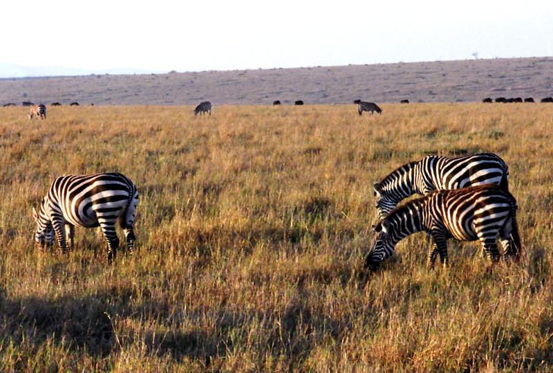 001 Masai Mara