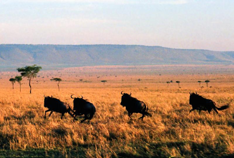 005 Masai Mara