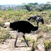 034 Samburu