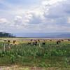 026 to Lake Naivasha