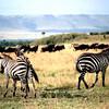 009 Masai Mara