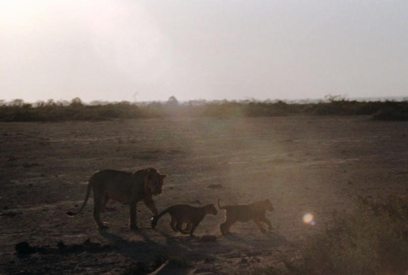 016 Amboseli