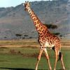 017 Masai Mara