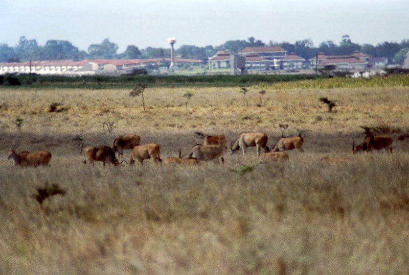 21 Nairobi Nat'l Park