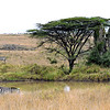 34 Nairobi Nat'l Park