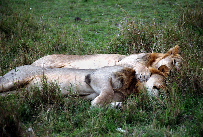 030 Masai Mara