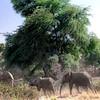 032 Samburu