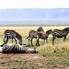 007 Masai Mara