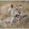 Mara 2015 Day 1