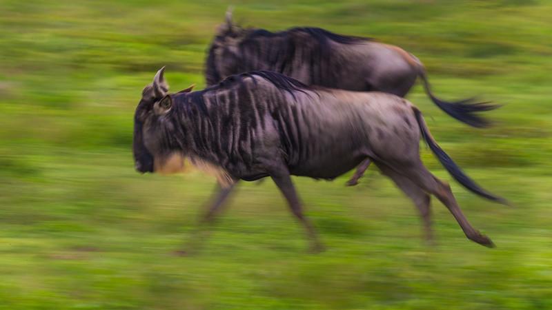 Tanzania16-2292