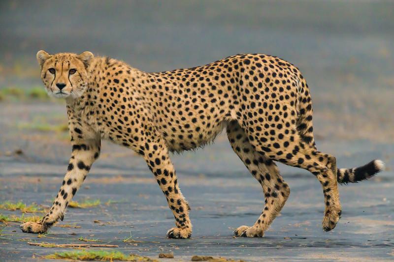 Tanzania16-1322