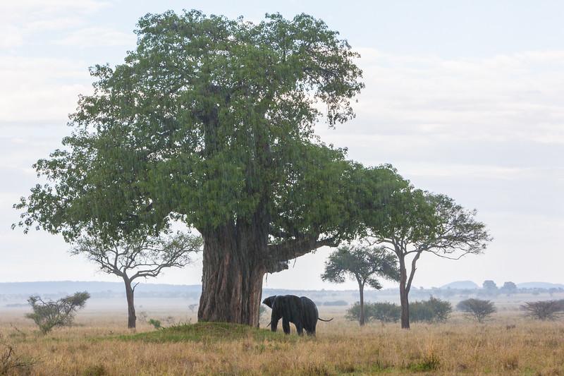 Tanzania09-0622