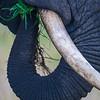 Africa. Tanzania. African Elephant at Tarangire NP.